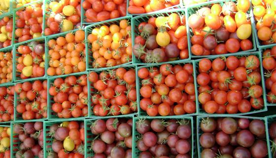 Томатов черри большой выбор сортов. Плоды отличаются  по цвету,запаху и вкусу.