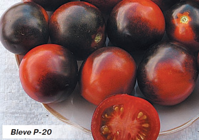 Красивые, вкусные с необычной окраской помидоры сорта BLEVE P-20