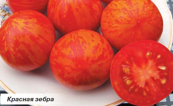 Красивые и вкусные помидоры сорта Красная зебра.